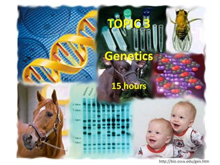 TOPIC 3 Genetics 15 hours