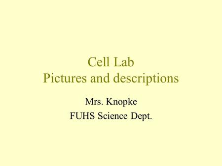 Cell Lab Pictures and descriptions Mrs. Knopke FUHS Science Dept.