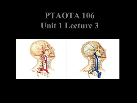 PTAOTA 106 Unit 1 Lecture 3. The Basics Arteries: Carry blood away from the heart toward tissues. They typically have thicker vessels walls to handle.