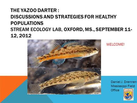 THE YAZOO DARTER : DISCUSSIONS AND STRATEGIES FOR HEALTHY POPULATIONS STREAM ECOLOGY LAB, OXFORD, MS., SEPTEMBER 11- 12, 2012 Daniel J. Drennen Mississippi.