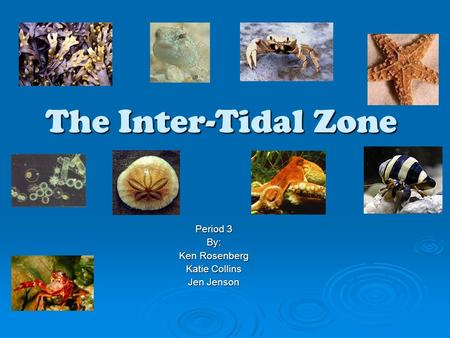 The Inter-Tidal Zone Period 3 By: Ken Rosenberg Katie Collins Jen Jenson.