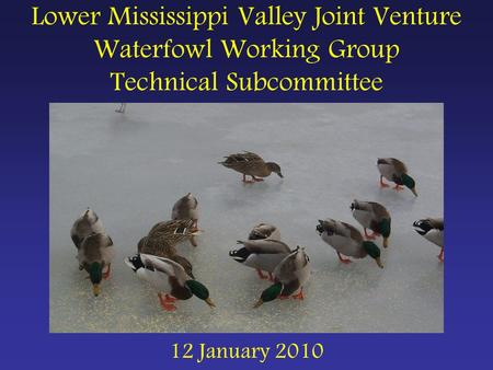 Lower Mississippi Valley Joint Venture Waterfowl Working Group Technical Subcommittee 12 January 2010.