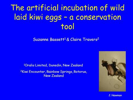 The artificial incubation of wild laid kiwi eggs – a conservation tool Suzanne Bassett 1 & Claire Travers 2 2 Kiwi Encounter, Rainbow Springs, Rotorua,