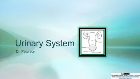 Urinary System Dr. Peterson. Kidney Urinalysis (UA) Other Diagnostic Tests (related to kidney, ureter, bladder, prostate)