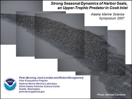 Strong Seasonal Dynamics of Harbor Seals, an Upper-Trophic Predator in Cook Inlet Peter Boveng, Josh London and Robert Montgomery Polar Ecosystems Program.
