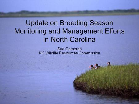 Update on Breeding Season Monitoring and Management Efforts in North Carolina Sue Cameron NC Wildlife Resources Commission.