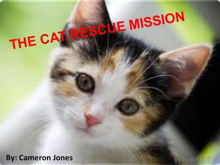 THE CAT RESCUE MISSION By: Cameron Jones. THE CAT RESCUE MISSION By: Cameron Jones.
