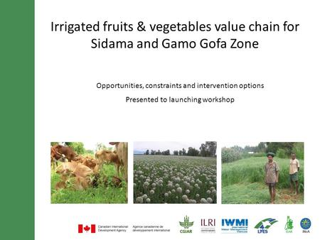 Irrigated fruits & vegetables value chain for Sidama and Gamo Gofa Zone Opportunities, constraints and intervention options Presented to launching workshop.