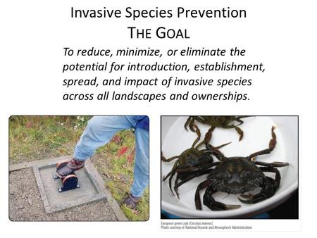 Invasive Species Prevention T HE G OAL To reduce, minimize, or eliminate the potential for introduction, establishment, spread, and impact of invasive.