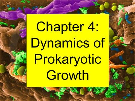 Chapter 4: Dynamics of Prokaryotic Growth. Important Point: