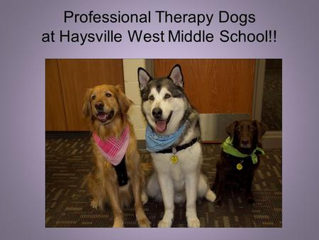 Professional Therapy Dogs at Haysville West Middle School!!