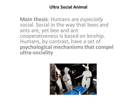 Ultra Social Animal Main thesis: Humans are especially social. Social in the way that bees and ants are, yet bee and ant cooperativeness is based on kinship.