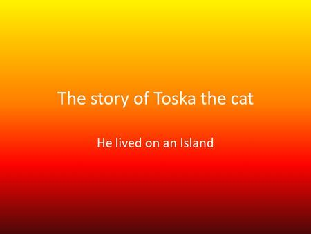The story of Toska the cat He lived on an Island.