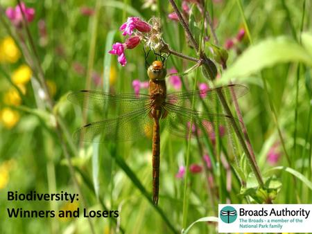 Aren't the Broads Brilliant ! Biodiversity: Winners and Losers.