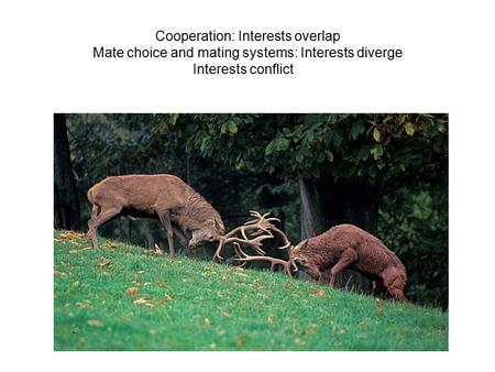 Cooperation: Interests overlap Mate choice and mating systems: Interests diverge Interests conflict.