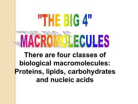 THE BIG 4 MACROMOLECULES