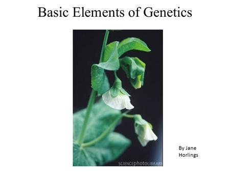 Basic Elements of Genetics By Jane Horlings. Genetics The alternate forms of a gene are called alleles Alleles are denoted by a letter or letters; dominant.