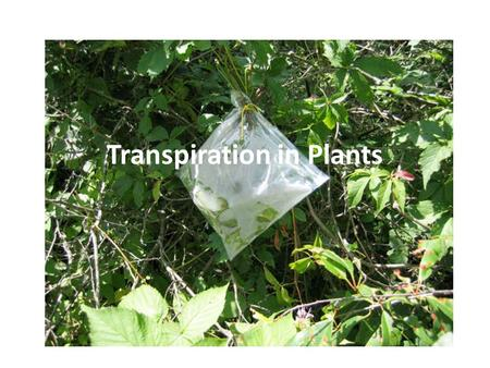 Transpiration in Plants