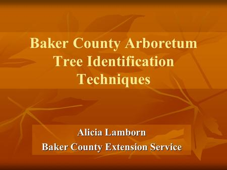 Baker County Arboretum Tree Identification Techniques Alicia Lamborn Baker County Extension Service.