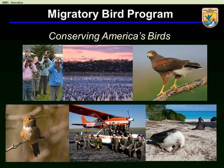Migratory Bird Program Conserving America's Birds.