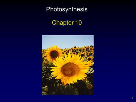 1 Photosynthesis Chapter 10. 2 Outline Chloroplasts Light-Independent Reactions Absorption Spectra – Pigments Light-Dependent Reactions Photosystems C.