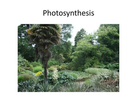 Photosynthesis. Photosynthesis is the process by which organisms use the energy of the sun to synthesize organic compounds (sugars) from inorganic compounds.