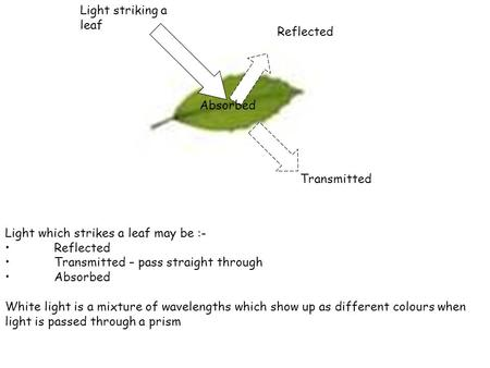 Light which strikes a leaf may be :- Reflected Transmitted – pass straight through Absorbed White light is a mixture of wavelengths which show up as different.