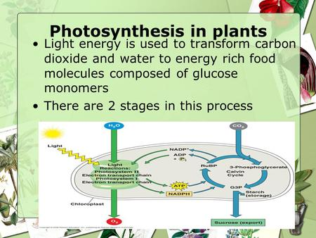 Photosynthesis in plants Light energy is used to transform carbon dioxide and water to energy rich food molecules composed of glucose monomers There are.