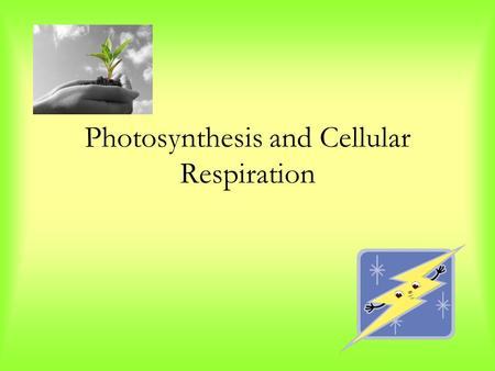 Photosynthesis and Cellular Respiration. Trapping the Sun's Energy The process by which plants capture energy from the sun to build carbohydrates through.