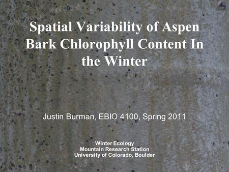Spatial Variability of Aspen Bark Chlorophyll Content In the Winter Justin Burman, EBIO 4100, Spring 2011 Winter Ecology Mountain Research Station University.