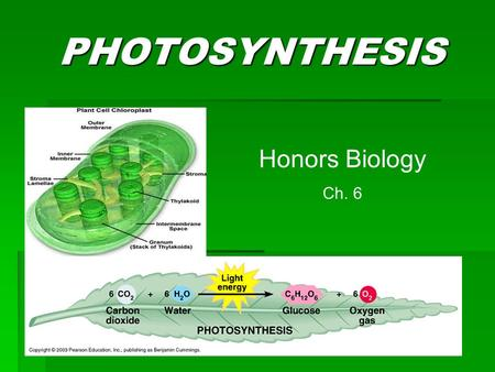 PHOTOSYNTHESIS Honors Biology Ch. 6. Carbon Cycle  Photosynthesis is a major part of the Carbon Cycle – the tracking of carbon through the Biosphere.