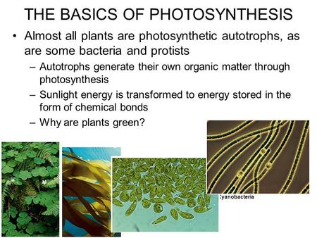 Almost all plants are photosynthetic autotrophs, as are some bacteria and protists –Autotrophs generate their own organic matter through photosynthesis.