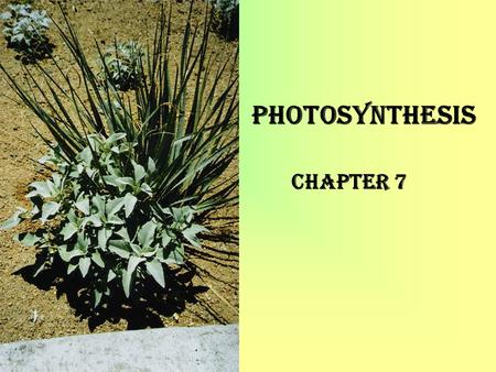 "Photosynthesis Chapter 7. Photo means light; synthesis means ""to put together"". Plants make glucose from CO2, H2O and some other elements, mainly N, P,"