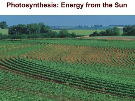 Photosynthesis: Energy from the Sun. Identifying Photosynthetic Reactants and Products  Reactants needed for photosynthesis:  H 2 O, & CO 2,  Products.