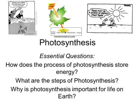 Photosynthesis Essential Questions: