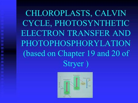 CHLOROPLASTS, CALVIN CYCLE, PHOTOSYNTHETIC ELECTRON TRANSFER AND PHOTOPHOSPHORYLATION (based on Chapter 19 and 20 of Stryer )