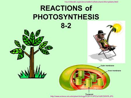 REACTIONS of PHOTOSYNTHESIS 8-2