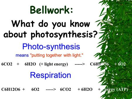Bellwork: What do you know about photosynthesis? Photo-synthesis means putting together with light. 6CO2 + 6H2O (+ light energy) -----> C6H12O6 + 6O2.