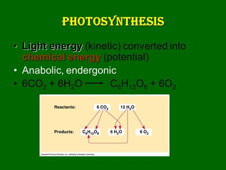 Photosynthesis Light energy chemical energyLight energy (kinetic) converted into chemical energy (potential) Anabolic, endergonic 6CO 2 + 6H 2 O C 6 H.