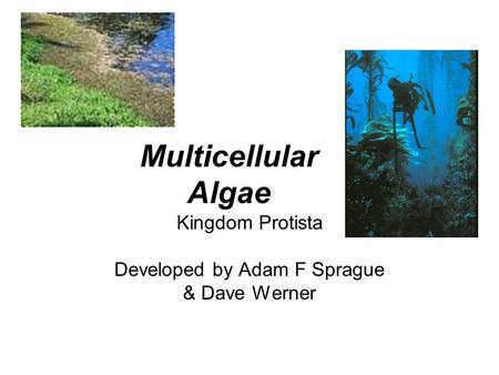Kingdom Protista Developed by Adam F Sprague & Dave Werner