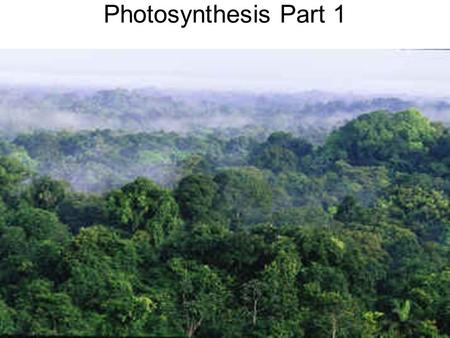 Photosynthesis Part 1. The Electromagnetic Spectrum.