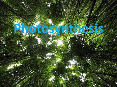 Photosynthesis. a metabolic pathway that converts light energy into chemical energy. is the process by which plants, some bacteria, and some protists.
