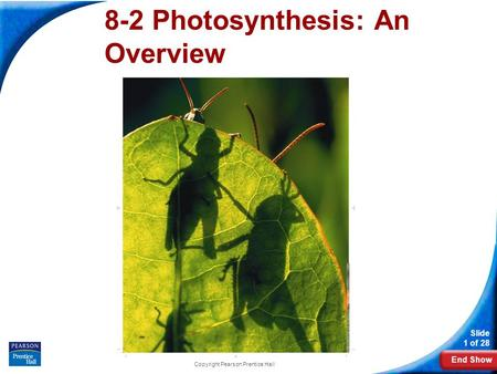 End Show Slide 1 of 28 Copyright Pearson Prentice Hall 8-2 Photosynthesis: An Overview.