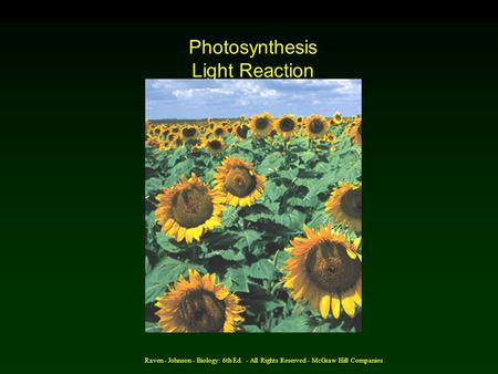 Raven - Johnson - Biology: 6th Ed. - All Rights Reserved - McGraw Hill Companies Photosynthesis Light Reaction (AP) Chapter 10.