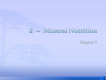 Chapter 5.  Acquired primarily through the roots  Inorganic ions  Nutrient cycles begin with plant roots – mining minerals from the soil  Soil mycorrhizza.