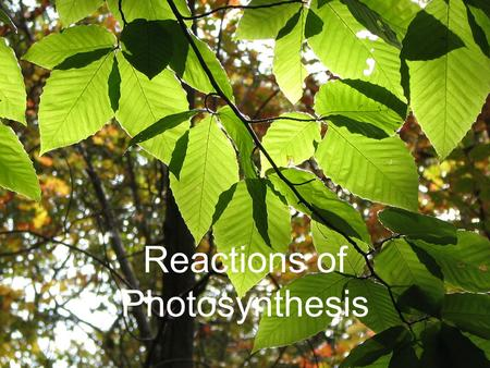 Reactions of Photosynthesis. Photosynthetic Equation Light.