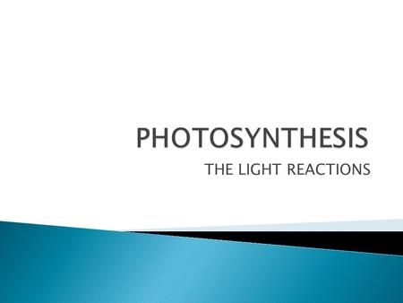 THE LIGHT REACTIONS.  Begin when photons strike the photosynthetic membrane. The process can be divided into three parts. 1) Photoexcitation: absorption.