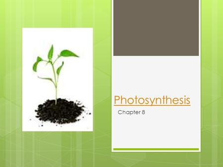 Photosynthesis Chapter 8. Where does all of our energy come from?
