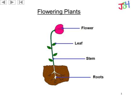 1 Flowering Plants Roots Leaf Flower Stem. 2 A Leaf Lamina Vein Midrib.