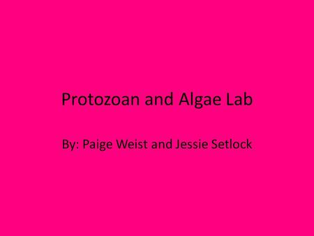 Protozoan and Algae Lab By: Paige Weist and Jessie Setlock.